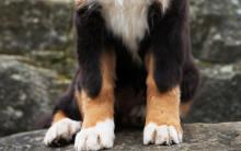 Klobrott - en vanlig anledning till veterinärbesök