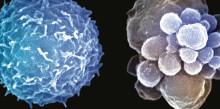 AbbVie und argenx arbeiten im Bereich der Immunonkologie zusammen