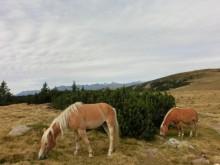Rennsaison auf dem Pferderennplatz Meran
