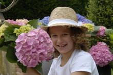 5 saker att tänka på när du väljer trädgårdshortensia