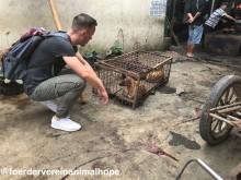 """""""Wie ein Gang durch die Hölle...""""  - Indonesien: Hunde und Katzen grausam erschlagen und anschließend verbrannt"""