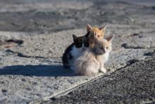 Över 100 000 hemlösa katter i Sverige – Mjau kräver ansvarsfullt kattägande!