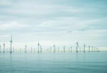 Unik studie om Lillgrunds vindkraftpark och påverkan på fisk