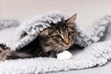 Evidensia och Djurskyddet tecknar avtal om samarbete för att främja sällskapsdjurens hälsa