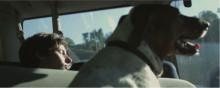 "DEERHUNTER 'LIVING MY LIFE' VIDEOPREMIERE  - NYTT ALBUM ""FADING FRONTIER"" UTE FREDAG 16 OKTOBER"