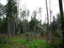 Avverkningarna i Bialowieza-skogen påverkade skyddade områden