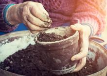 Växter hjälper äldre att fokusera på det friska