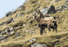 Safari in der Schweiz – Wildtierbeobachtungen im Herbst