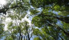 Trädkronorna skyddar livet i skogen från den globala uppvärmningen