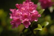Kräuter- und Blumenwoche im Vinschgau