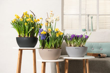 Frühjahrserwachen in den LECHUZA-Stores