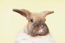 Så räddades Kaninen Smulan med ultraljud