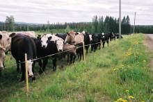 Åtta projekt om ekologisk produktion får pengar från Jordbruksverket