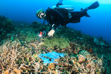 Bluewater says levels of plastics being found in deep sea fish are 'extraordinarily worrying' for human and planetary health
