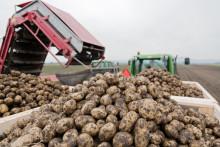 Potatisodlarnas skördeprognos 2016 presenterades igår