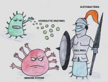 Föränderlig struktur viktig pusselbit i jakten på ny antibiotika
