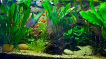 Koldioxidventilen som gör akvariefisken glad