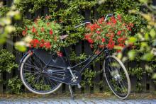 Ernst Kirchsteiger citat – om växter