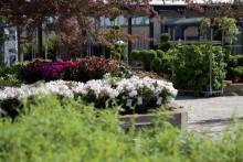 Blomsterlandet öppnar i Rydebäck, Helsingborg