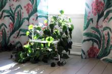 Nu öppnar utställningen Josef Franks flora på Sofiero slott