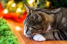 Julekoncert til fordel for Kattens Værn