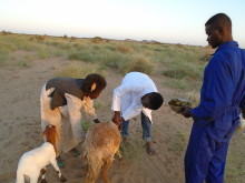 Vetting better all the time! Transforming lives by improving animal health in Sudan