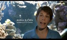Avsnitt 1: Aquaria bygger ny havsutställning