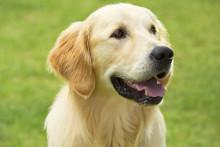 Purina Friskies ® -koiranruoka pärjäsi hyvin Kuluttajalehden vertailussa