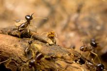 Termitter beskytter de tropiske skove under tørke