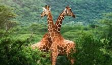 SÖDRA AFRIKA - Med Victoriafallen, Kapstaden, Safari och vinprovning