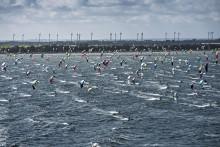 500 kitesurfere fra 19 lande konkurrerer på marathon-strækning over Femern Bælt