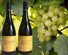 Sverigepremiär för viner från Les Héritiers du Comte Lafon