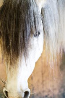 Frukostmöte - Hästens roll i samhället