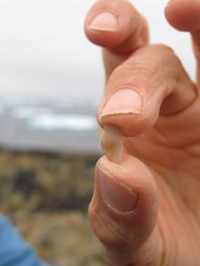 Ét gram agat føjer nyt til Grønlands forhistorie
