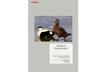 Ny rapport om fuglepåvirkning i Jammerland Bugt og Omø Syd projekter