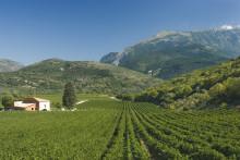 "Ekologiska Valle Reale ""Botteotto"""