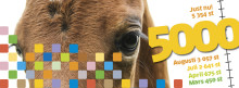 Nu har över 5000 barn upplevt häst!