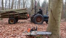 Med Jens og Henrik i skoven, del 2