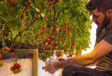 Pressinbjudan till nationell konferens om kretsloppsodling och Food Tech i Härnösand