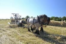 Hästen bidrar till att skapa en hållbar miljö i Äskhults by