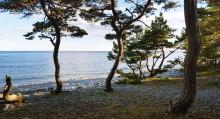 Torö stenstrand är den vackraste omvägen i östra Sverige