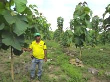 Life Forestry Plantagen-Standorte: Costa Rica und Ecuador auf Wachstumskurs