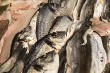 Komplet fiskemåltid på fem minutter