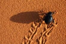 Sto på Nordbygg 2016 - Från törstiga skalbaggar till torra fasader