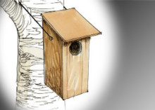 Kyrkbergets Vänner sätter upp fågelholkar på Kyrkberget