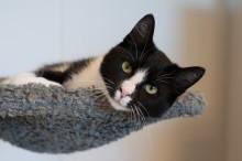 Hvilken lovgivning går katte under?