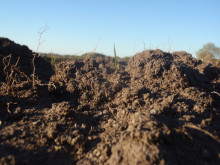 Ökad kunskap om fosfor i marken efter gödsling