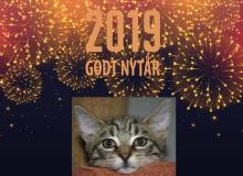 Godt nytår fra Kattens Værn!