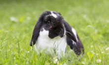 Så tar du hand om kaninen