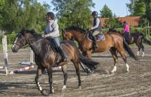 Presskonferens: Hästmässa i Blekinge